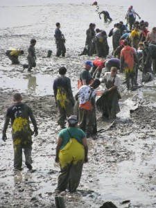 Wading through mud in Nushagak Bay, the workers form an assembly line. The fishery requires the employees undergo repetitive work. --Courtesy of Chris Brown