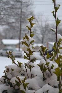 The delays on Jan. 14 were caused by predictions of snow dusting the streets. --Meklit Bekele